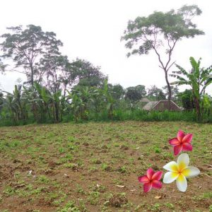Jual Tanah Ubud JTU 622