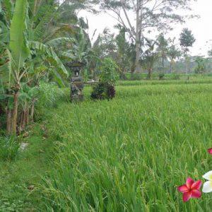 Jual Tanah Ubud JTU 660