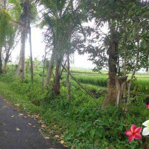 Jual Tanah Ubud JTU 661