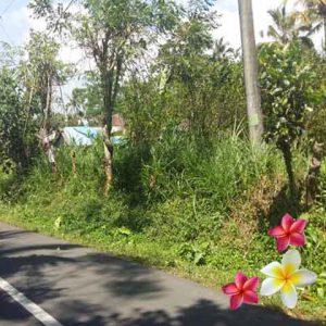 Jual Tanah Ubud JTU 697