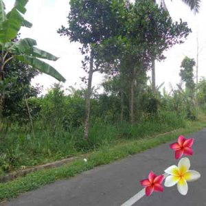 Jual Tanah Ubud JTU 728