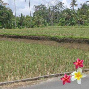 Jual Tanah Ubud JTU 737