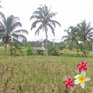 Jual Tanah Ubud JTU 761