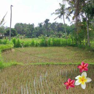 Jual Tanah Ubud 770