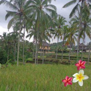 Jual Tanah Ubud 790