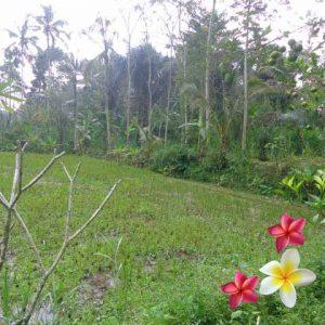 Jual Tanah Ubud 825