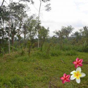 Jual Tanah Ubud 832