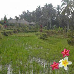 Jual Tanah Ubud 843