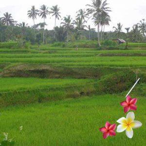 Jual Tanah Ubud JTU 860