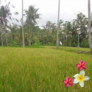 Jual Tanah Ubud JTU 864