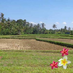 Jual Tanah Ubud JTU 868